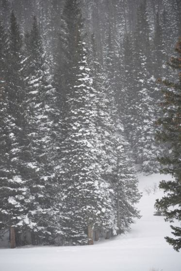snowypines